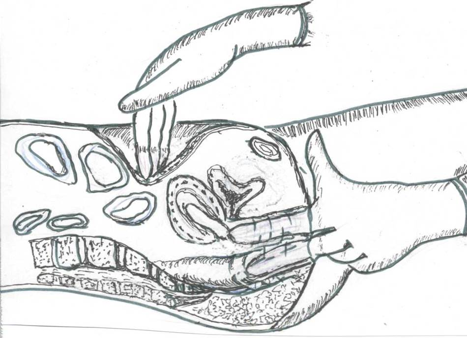 vlagalishe-abdominalnoe-issledovanie
