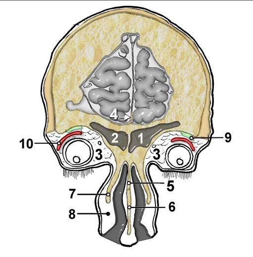 лор-органов, страница 6