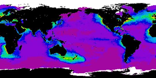 Global average phytoplankton