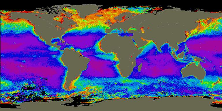 Phytoplankton Concentration